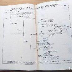 Diccionarios de segunda mano: DICCIONARIO IDEOLÓGICO DE LA LENGUA ESPAÑOLA - JULIO CASARES. 1942 1ª EDICIÓN. Lote 194212750