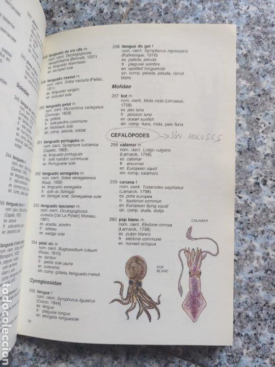 Diccionarios de segunda mano: ESPÈCIES PESQUERES DINTERÈS COMERCIAL NOMENCLATURA OFICIAL CATALANA - DEPARTAMENT CULTURA - Foto 7 - 262790765