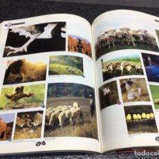 Libros de segunda mano: AGE VOL. 4 LIBRO DE FOTOGRAFIA Y DISEÑO 384 PAGINAS. Lote 112763303