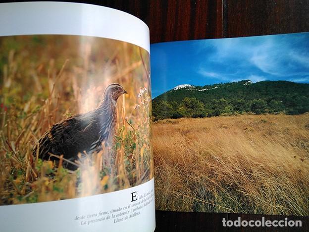 Libros de segunda mano: La naturaleza en Baleares · Mateo Castello - Foto 5 - 208423327