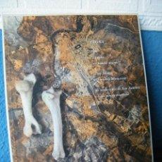 Libros de segunda mano: LEONA - OLGA AFUERA, CARLOS CLARES Y SOLEDAD MATESANZ - CAJA DE AHORROS DE LA INMACULADA (1995). Lote 210251207