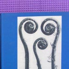Libros de segunda mano: KARL BLOSSFELDT: FOTOGRAFIAS. Lote 212565088