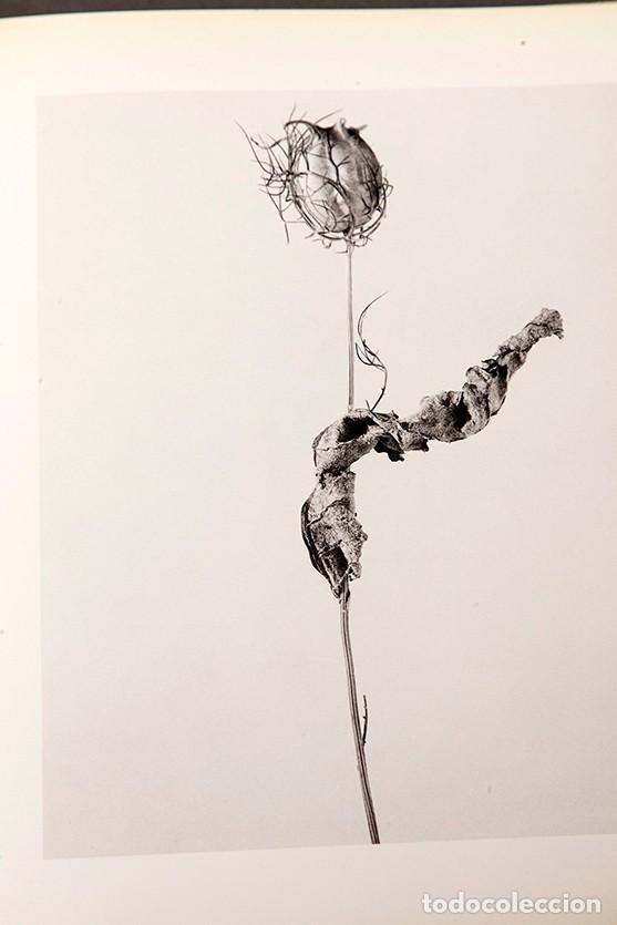 Libros de segunda mano: JOAN FONTCUBERTA - HERBARIUM - Foto 6 - 245391240