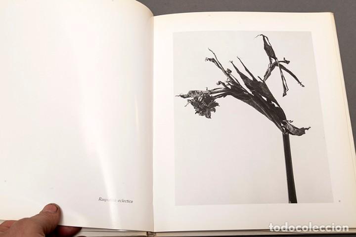 Libros de segunda mano: JOAN FONTCUBERTA - HERBARIUM - Foto 7 - 245391240