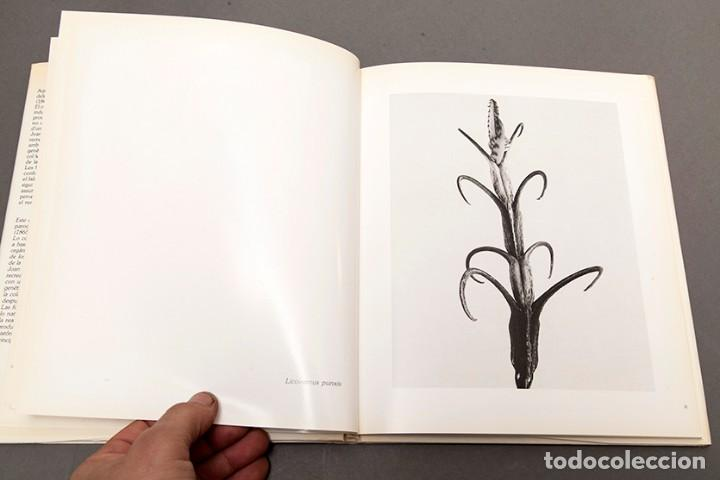 Libros de segunda mano: JOAN FONTCUBERTA - HERBARIUM - Foto 8 - 245391240