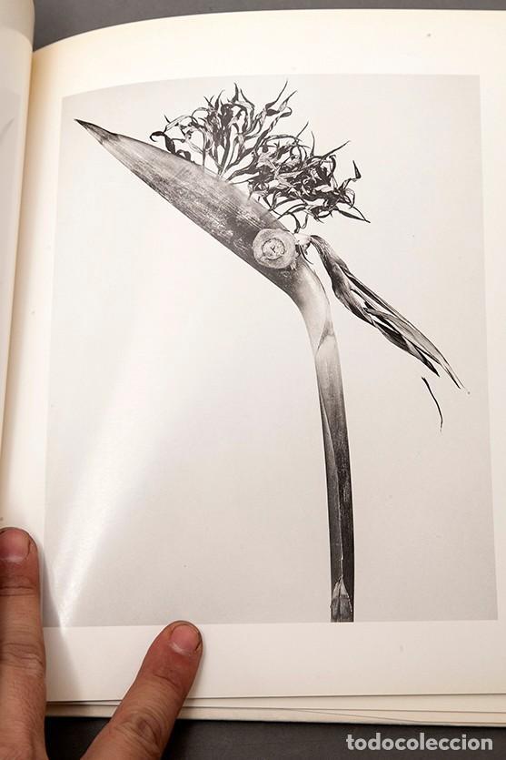Libros de segunda mano: JOAN FONTCUBERTA - HERBARIUM - Foto 10 - 245391240