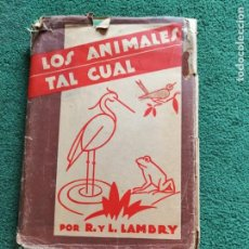 Libros de segunda mano: LOS ANIMALES TAL CUAL. PARA APRENDER A DIBUJAR ANIMALES (R. Y L. LAMBRY) 2ª EDICIÓN 1941. Lote 249276985