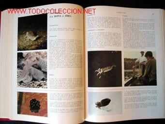 Enciclopedias de segunda mano: - Foto 8 - 24834921