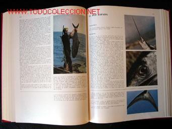 Enciclopedias de segunda mano: - Foto 9 - 24834921