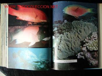 Enciclopedias de segunda mano: MUNDO SUBMARINO - ENCICLOPEDIA COSTEAU - 10 Tomos. - Foto 5 - 21810285