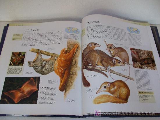 national geographic : enciclopedia de los anima - Comprar
