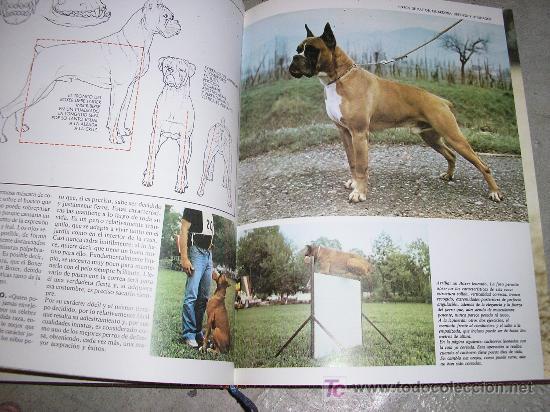 Enciclopedias de segunda mano: EL PERRO - EDICIONES NUEVA LENTE - 1982 TOMO 1 TOMO 2 TOMO 3 TOMO 4 - Foto 3 - 17725045