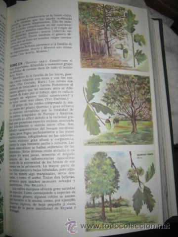 Enciclopedias de segunda mano: Enciclopedia. Ciencias Naturales. Editorial Bruguera. 1967. - Foto 3 - 48411093