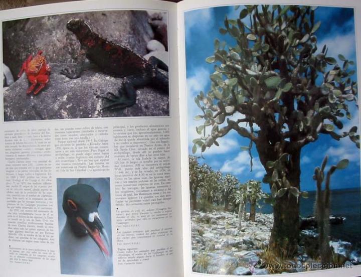 Enciclopedias de segunda mano: EL HOMBRE Y SU MUNDO - 11 TOMOS COMPLETA Y COMO NUEVA - ED. AGLO 1991 - 2816 PÁGINAS - VER ÍNDICES - Foto 12 - 41019693