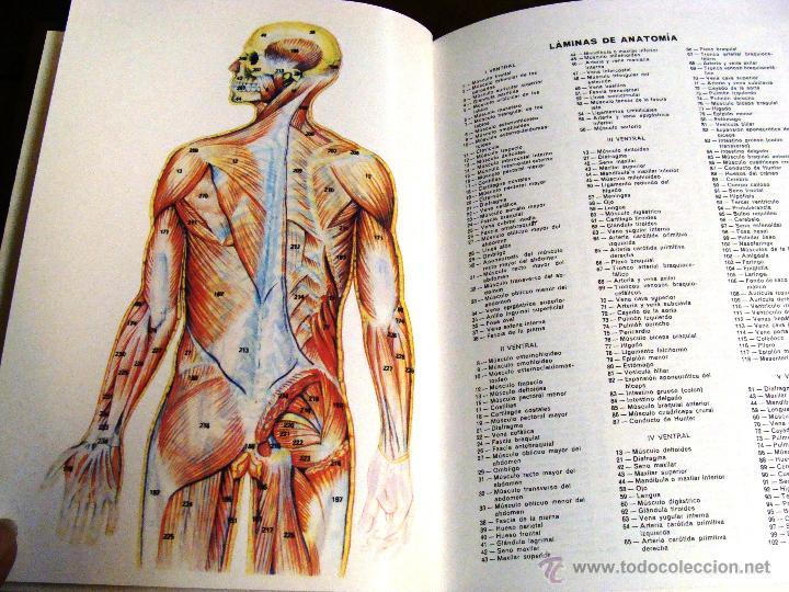 Enciclopedias de segunda mano: DICCIONARIO ENCICLOPÉDICO ÉXITO OCÉANO DE 5 TOMOS EDICIÓN 1990 - Foto 13 - 44861963