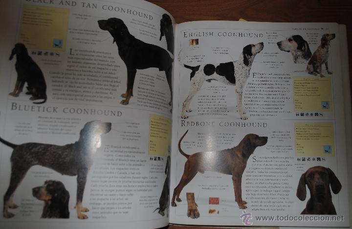 Enciclopedias de segunda mano: ENCICLOPEDIA DEL PERRO, BRUCE FOGLE, OMEGA BARCELONA 1996, LA GUÍA ILUSTRADA MÁS COMPLETA - Foto 2 - 47087435