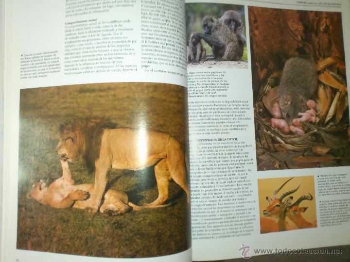 Enciclopedias de segunda mano: NACIONAL GEOGRAPHIC EL MARAVILLOSO MUNDO DE LOS ANIMALES SIN ABRIR - Foto 4 - 49291914