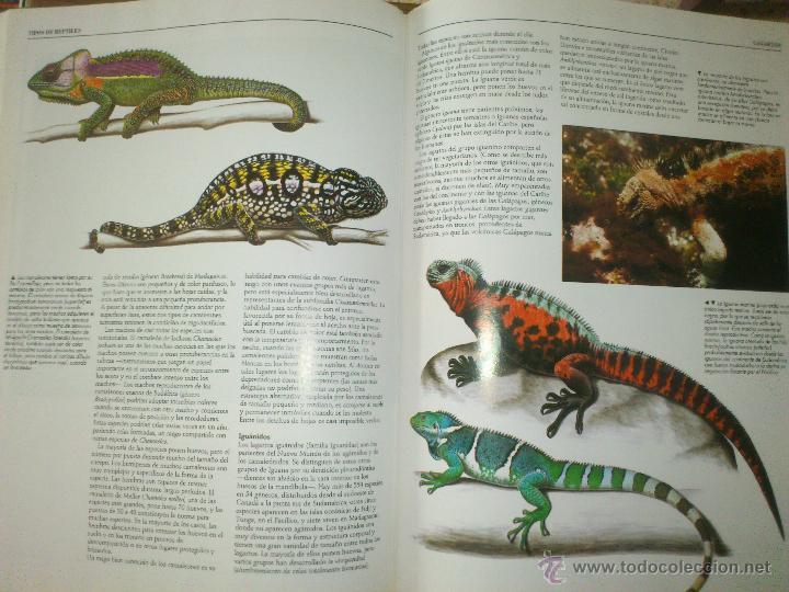 Enciclopedias de segunda mano: NACIONAL GEOGRAPHIC EL MARAVILLOSO MUNDO DE LOS ANIMALES SIN ABRIR - Foto 5 - 49291914
