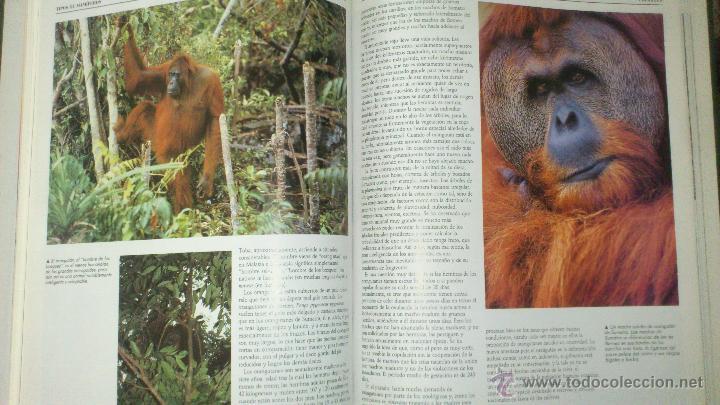 Enciclopedias de segunda mano: NACIONAL GEOGRAPHIC EL MARAVILLOSO MUNDO DE LOS ANIMALES SIN ABRIR - Foto 6 - 49291914