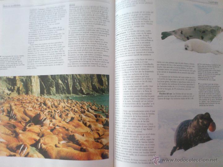 Enciclopedias de segunda mano: NACIONAL GEOGRAPHIC EL MARAVILLOSO MUNDO DE LOS ANIMALES SIN ABRIR - Foto 7 - 49291914