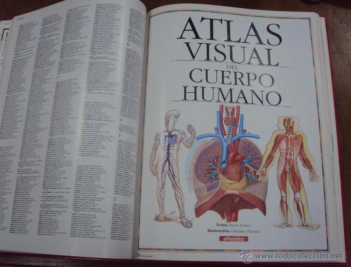 Enciclopedias de segunda mano: LOS GRANDES ATLAS VISUALES TOMOS 1 Y 2 (EL PERIODICO 1991) VER FOTOS - Foto 7 - 53079852