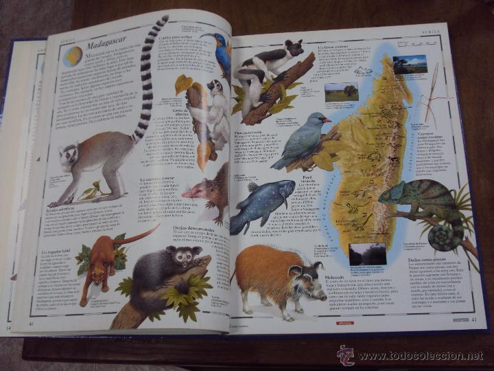 Enciclopedias de segunda mano: LOS GRANDES ATLAS VISUALES TOMOS 1 Y 2 (EL PERIODICO 1991) VER FOTOS - Foto 12 - 53079852