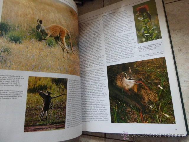 Enciclopedias de segunda mano: EL MARAVILLOSO MUNDO DE LOS ANIMALES. NATIONAL GEOGRAPHIC, 2000. 17 TOMOS. - Foto 2 - 53470012