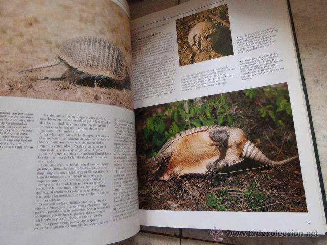 Enciclopedias de segunda mano: EL MARAVILLOSO MUNDO DE LOS ANIMALES. NATIONAL GEOGRAPHIC, 2000. 17 TOMOS. - Foto 3 - 53470012