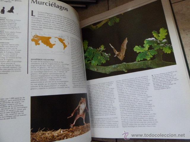 Enciclopedias de segunda mano: EL MARAVILLOSO MUNDO DE LOS ANIMALES. NATIONAL GEOGRAPHIC, 2000. 17 TOMOS. - Foto 4 - 53470012