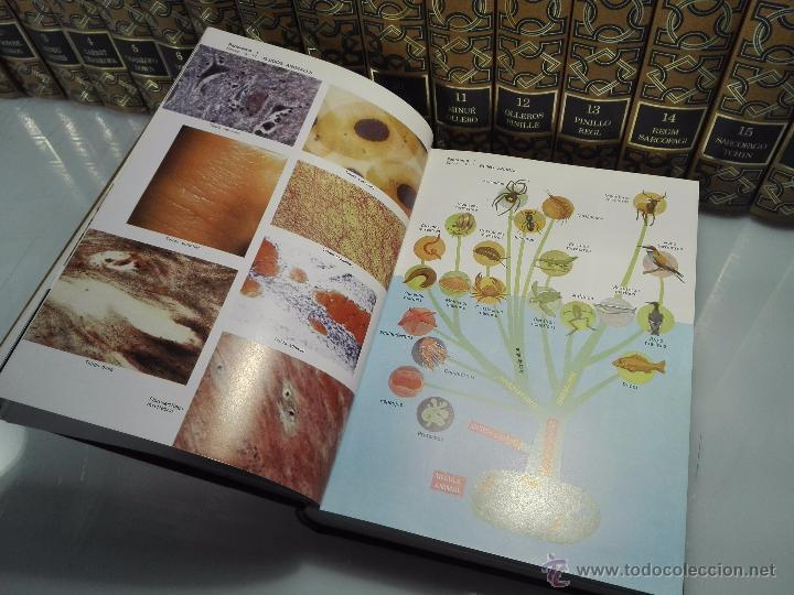 Enciclopedias de segunda mano: TREMENDA ENCICLOPEDIA UNIVERSAL SOPENA COMPUESTA DE 25 VOLÚMENES - BARCELONA - 1981 - - Foto 26 - 54400179