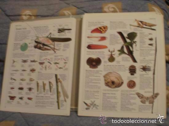 Enciclopedias de segunda mano: EL GRAN LIBRO DE CONSULTA - ED. el pais - COMPLETO SOLO FALTA ENCUADERNARLO -RefAlYaEmEx8FoIz - Foto 4 - 58207445