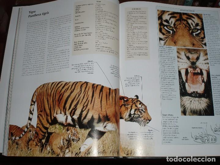 Enciclopedias de segunda mano: 10 TOMOS ENCICLOPEDIA DE NATIONAL GEOGRAPHIC EL MARAVILLOSO MUNDO DE LOS ANIMALES - Foto 3 - 86247686