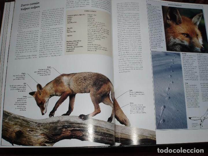 Enciclopedias de segunda mano: 10 TOMOS ENCICLOPEDIA DE NATIONAL GEOGRAPHIC EL MARAVILLOSO MUNDO DE LOS ANIMALES - Foto 4 - 86247686