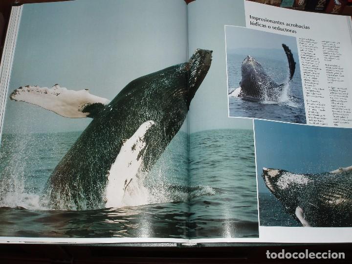 Enciclopedias de segunda mano: 10 TOMOS ENCICLOPEDIA DE NATIONAL GEOGRAPHIC EL MARAVILLOSO MUNDO DE LOS ANIMALES - Foto 5 - 86247686