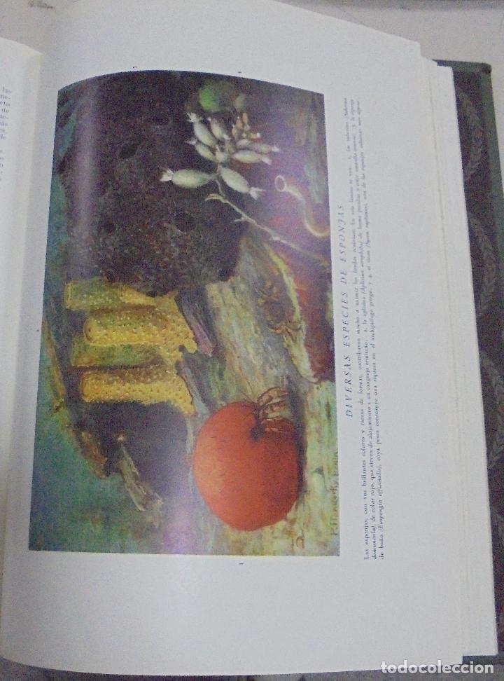 Enciclopedias de segunda mano: HISTORIA NATURAL. TOMO II. ZOOLOGIA (INVERTEBRADOS). 3º EDICION. INSTITUTO GALLACH. BARCELONA. 1947 - Foto 2 - 79087713
