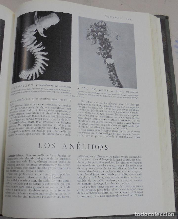Enciclopedias de segunda mano: HISTORIA NATURAL. TOMO II. ZOOLOGIA (INVERTEBRADOS). 3º EDICION. INSTITUTO GALLACH. BARCELONA. 1947 - Foto 3 - 79087713