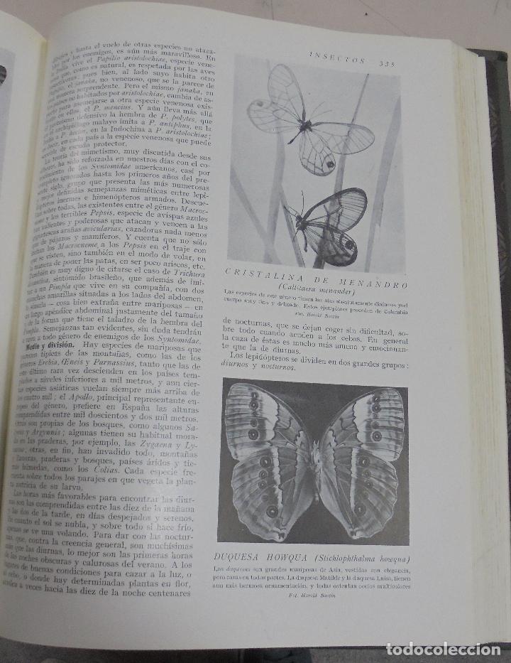 Enciclopedias de segunda mano: HISTORIA NATURAL. TOMO II. ZOOLOGIA (INVERTEBRADOS). 3º EDICION. INSTITUTO GALLACH. BARCELONA. 1947 - Foto 4 - 79087713