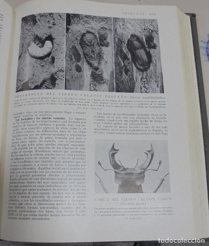 Enciclopedias de segunda mano: HISTORIA NATURAL. TOMO II. ZOOLOGIA (INVERTEBRADOS). 3º EDICION. INSTITUTO GALLACH. BARCELONA. 1947 - Foto 6 - 79087713