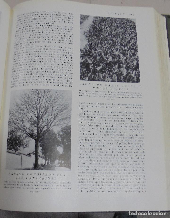 Enciclopedias de segunda mano: HISTORIA NATURAL. TOMO II. ZOOLOGIA (INVERTEBRADOS). 3º EDICION. INSTITUTO GALLACH. BARCELONA. 1947 - Foto 7 - 79087713
