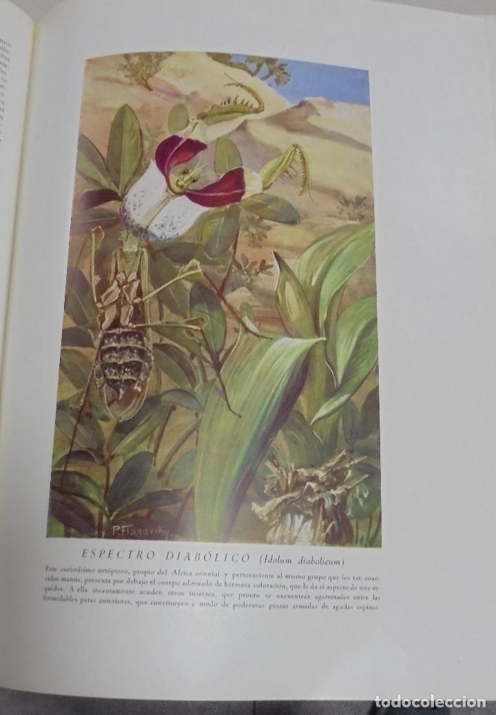 Enciclopedias de segunda mano: HISTORIA NATURAL. TOMO II. ZOOLOGIA (INVERTEBRADOS). 3º EDICION. INSTITUTO GALLACH. BARCELONA. 1947 - Foto 8 - 79087713