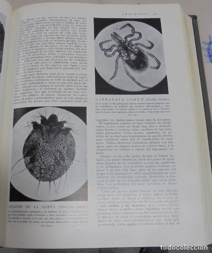 Enciclopedias de segunda mano: HISTORIA NATURAL. TOMO II. ZOOLOGIA (INVERTEBRADOS). 3º EDICION. INSTITUTO GALLACH. BARCELONA. 1947 - Foto 10 - 79087713