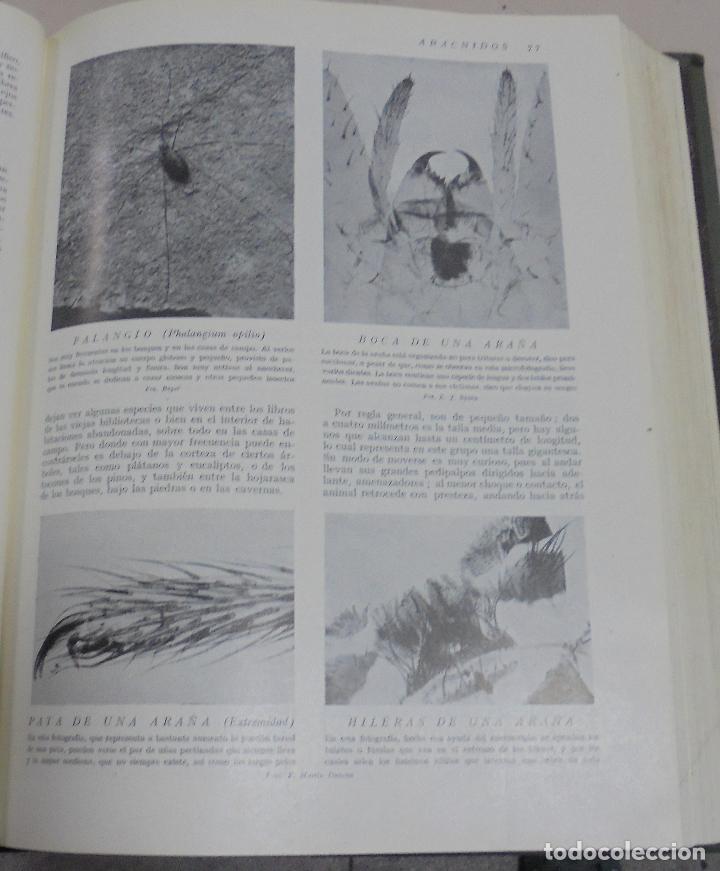 Enciclopedias de segunda mano: HISTORIA NATURAL. TOMO II. ZOOLOGIA (INVERTEBRADOS). 3º EDICION. INSTITUTO GALLACH. BARCELONA. 1947 - Foto 11 - 79087713