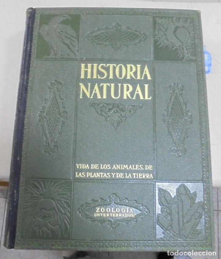 Enciclopedias de segunda mano: HISTORIA NATURAL. TOMO II. ZOOLOGIA (INVERTEBRADOS). 3º EDICION. INSTITUTO GALLACH. BARCELONA. 1947 - Foto 12 - 79087713