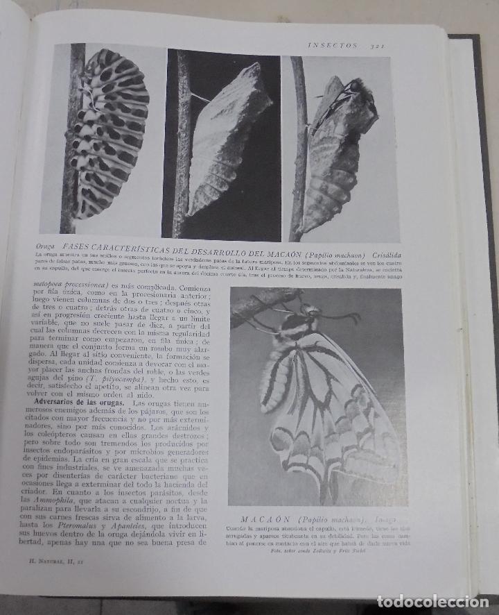 Enciclopedias de segunda mano: HISTORIA NATURAL. TOMO II. ZOOLOGIA (INVERTEBRADOS). 5º EDICION. INSTITUTO GALLACH. BARCELONA. 1960 - Foto 3 - 79088081