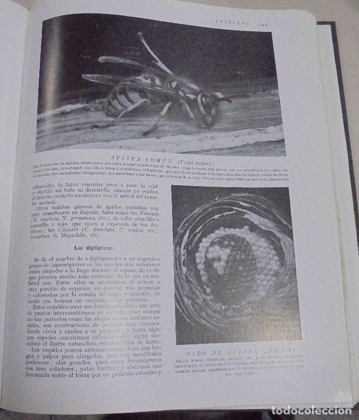 Enciclopedias de segunda mano: HISTORIA NATURAL. TOMO II. ZOOLOGIA (INVERTEBRADOS). 5º EDICION. INSTITUTO GALLACH. BARCELONA. 1960 - Foto 4 - 79088081