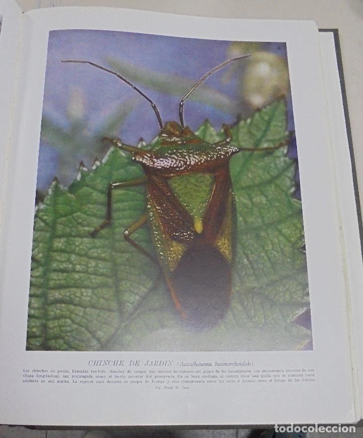 Enciclopedias de segunda mano: HISTORIA NATURAL. TOMO II. ZOOLOGIA (INVERTEBRADOS). 5º EDICION. INSTITUTO GALLACH. BARCELONA. 1960 - Foto 5 - 79088081