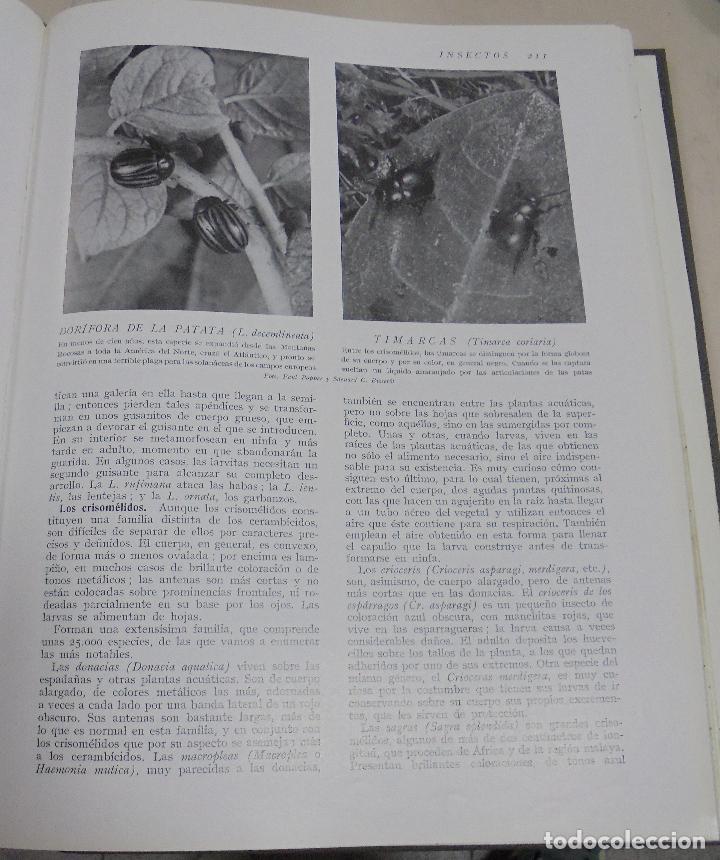 Enciclopedias de segunda mano: HISTORIA NATURAL. TOMO II. ZOOLOGIA (INVERTEBRADOS). 5º EDICION. INSTITUTO GALLACH. BARCELONA. 1960 - Foto 6 - 79088081