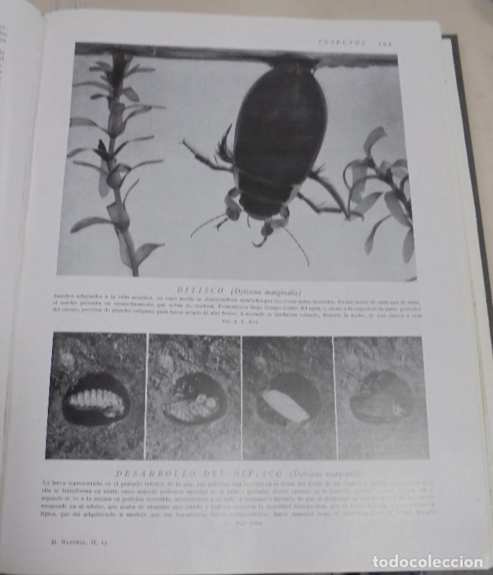 Enciclopedias de segunda mano: HISTORIA NATURAL. TOMO II. ZOOLOGIA (INVERTEBRADOS). 5º EDICION. INSTITUTO GALLACH. BARCELONA. 1960 - Foto 7 - 79088081