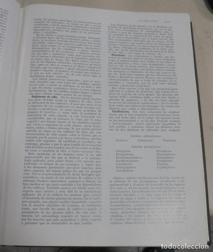 Enciclopedias de segunda mano: HISTORIA NATURAL. TOMO II. ZOOLOGIA (INVERTEBRADOS). 5º EDICION. INSTITUTO GALLACH. BARCELONA. 1960 - Foto 8 - 79088081