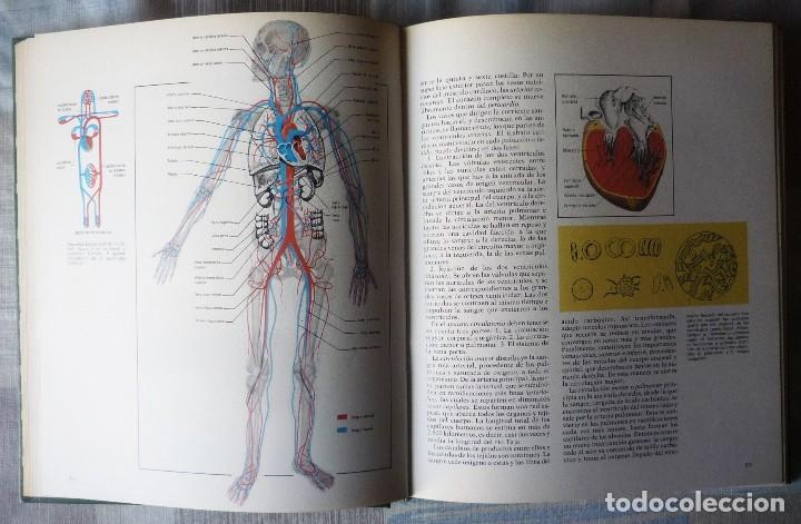 Enciclopedias de segunda mano: DOS LIBROS DE LA ENCICLOPEDIA BASE / 10 CONSULTOR DIDACTICO - Foto 5 - 80821459